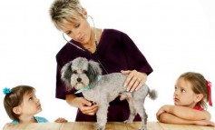 Aviva to underwrite its own pet insurance from 1 August 2012