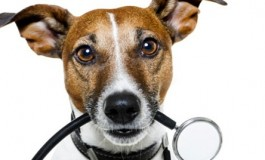 Pet insurance claims are on the rise