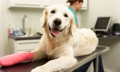 Pet insurance premiums can double as your pet ages